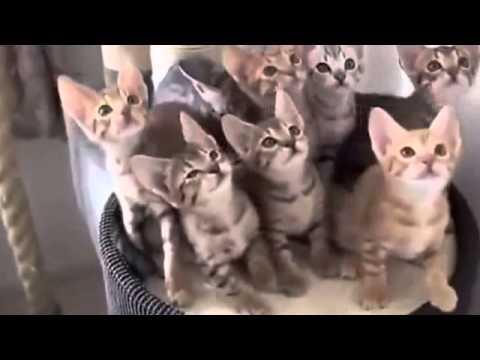 فيديو مضحك - 2014 - 1  Funny Video