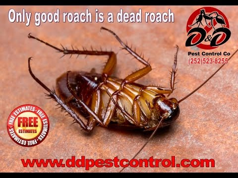 German Roach Treatment | Jacksonville | Kinston | Greenville, NC