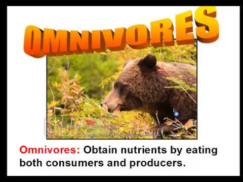 How Living Things Obtain Energy (Consumers and Producers)
