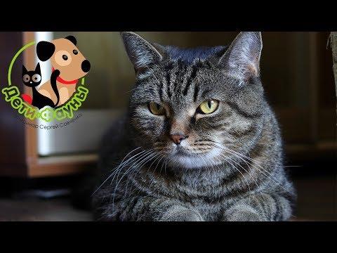 Если котенок погиб от инфекции, когда можно завести нового?