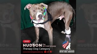 2015 American Humane Association Hero Dog Awards™ - Therapy Dog Category – Hudson