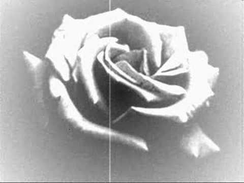 "Tremolo - ""Rosas Negras"""