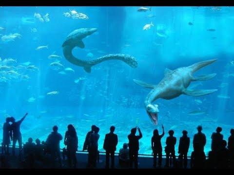 Monterey Bay Aquarium in a Nut Shell