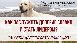 Секреты правильной дрессировки лабрадора. Как заслужить доверие собаки и стать лидером.