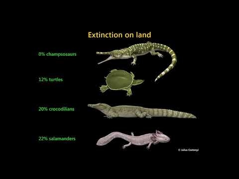 The Cretaceous-Palaeogene Mass Extinction: What Do We Really Know?