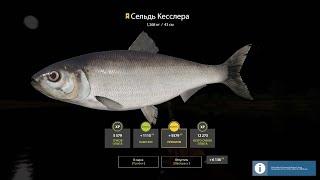 Русская рыбалка 4 В три палки на сома и жерех РР4