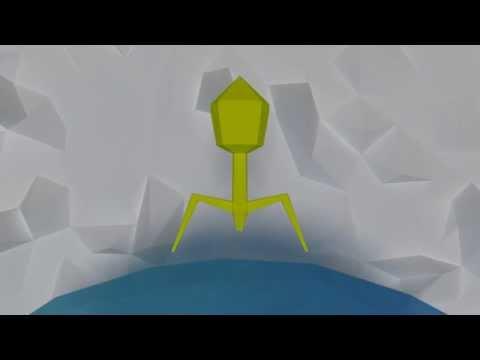 Virus Third Animation