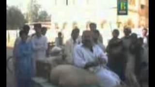 basher badshah edit by shafqat magsi 03142231776