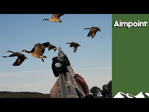 Massive Swedish Goose Hunt