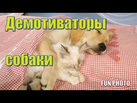 Демотиваторы собаки на FUN PHOTO
