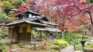 [4K] 晩秋・三渓園の紅葉
