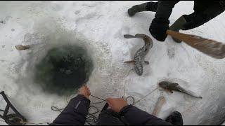 Отчёт с рыбалки 11.01.2021 (57)