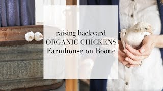 Backyard Chickens for Beginners   How to Care for Chickens   CHICK DAYS at Tractor Supply