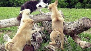 Приколы.Смотреть приколы.Война кошек и собак...