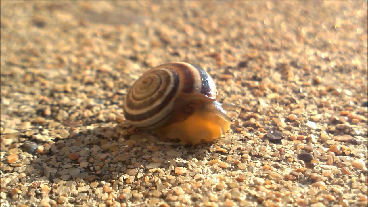 Snail shell inside