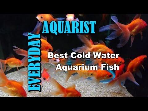 Best Cold Water & Temperate Freshwater Aquarium Fish