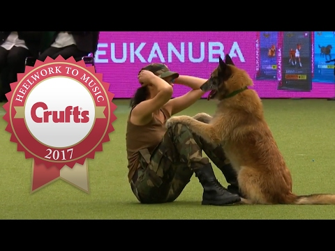 Thumbnail: Amazing Dog Performs CPR, Squats and Press Ups in Heelwork To Music Routine | Crufts 2017