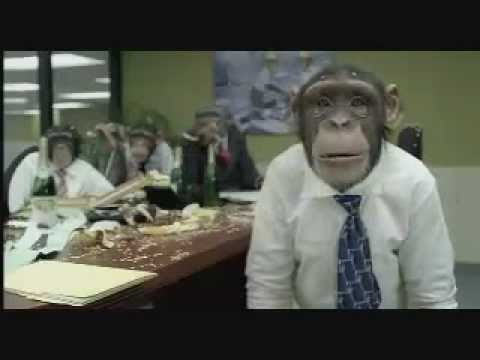 Monkey Board Meeting Mp4 Youtube