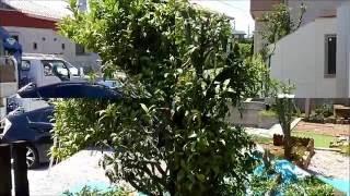 埼玉県加須市の植木屋・中島造園です。 植木の剪定・伐採・消毒・抜根・...