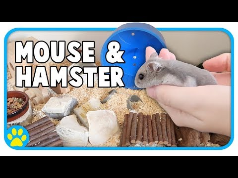 Cleaning & Setting Up My Mouse & Dwarf Hamster Cages