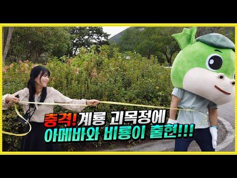 충격! 계룡 괴목정에 아메바와 비룡이 출현!!! 이미지 3