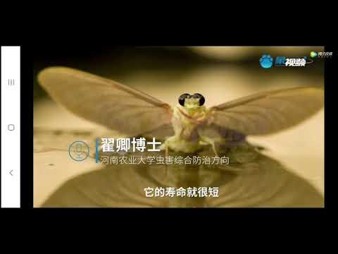 """末日异象?河南邓州出现铺天盖地数十万只""""怪虫""""居民恐慌(图/视频)"""