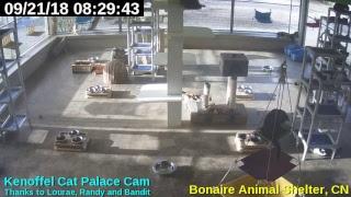 Animal Shelter Bonaire Live Stream thumbnail