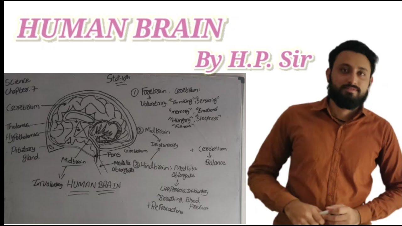 CLASS 10    HUMAN BRAIN    NCERT - YouTube