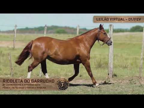 Lote 14 - Ricoleta do Garrucho