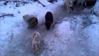 Собаки Бездомные щенки 1 января 2015 года
