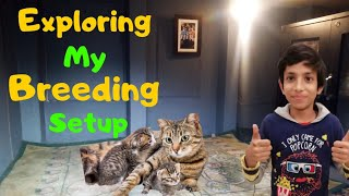 Exploring Breeding Setup And Quality Time With Cats | Why Have I Kept 4 Cats | Exposed !