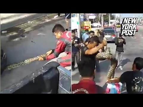 Workers pull giant python out of car engine