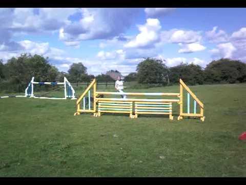 Dog jumping horse jumps