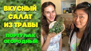 Вкусный салат из травы | Портулак огородный