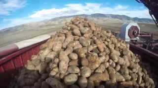 30,000 lbs of Potatoes from field to storage in 30 seconds