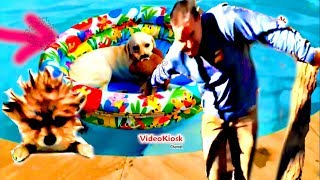 FUNNY CUTE ANIMALS - Adorable Pet Video Compilation October 2018 | Best Try Not To Laugh  and more.
