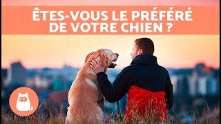 10 signes qui prouvent que vous êtes la personne préférée de votre chien 🐶❤