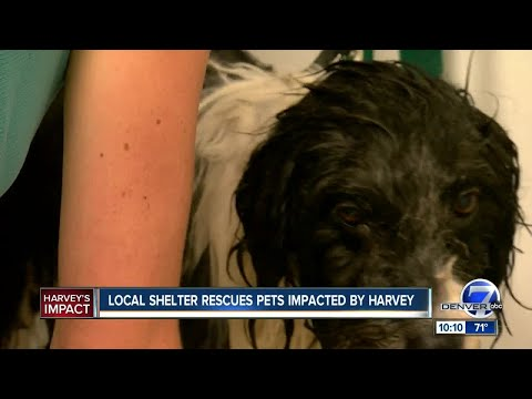Denver Animal Shelter Helps Rescue Dogs From Houston