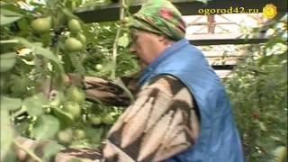 Изобильные овощи в огороде  Анны Демчук. Советы без посредников