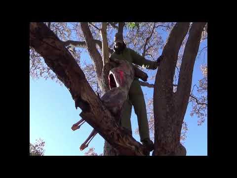 zimbabwe-big-game-safari---lion,-buffalo,-hippo,-croc