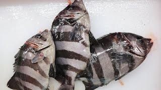 Cómo hacer Sashimi   Gastronomía Insólita