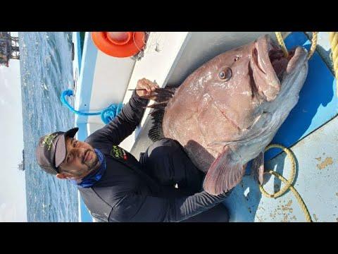 GIANT GROUPER CAUGHT ON HANDLINE - Battling A Sea Monster - Deep Sea Fishing In The Caribbean