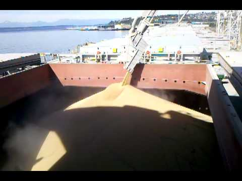 Loading Grain at No. 7 Hold on a Panamax