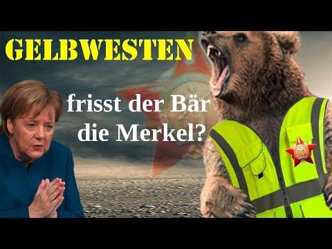 Gelbwesten - Frisst der Bär die Merkel?
