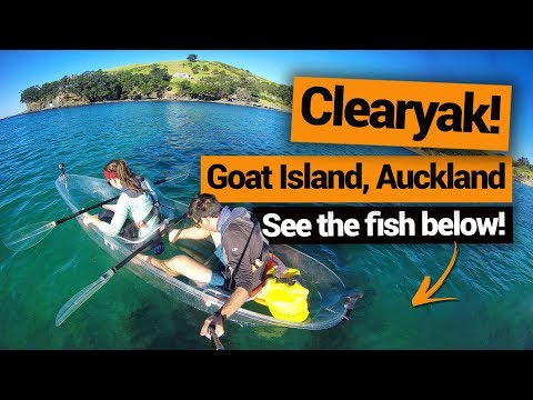 Clear Kayaking At Goat Island In Auckland – New Zealand's Biggest Gap Year – BackpackerGuide.NZ
