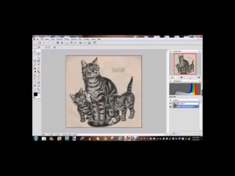 Free Software for Tattooing  Tattoo University