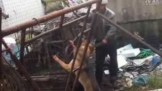 ✦INSIDE THE BARBARIC DOG MEAT MARKET IN CHINA(Part.4)✦