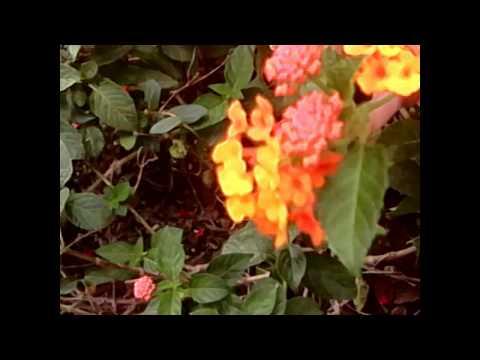 หน้าที่และส่วนประกอบของดอกผกากรองโรงเรียนบ้านท่าไม้รวก