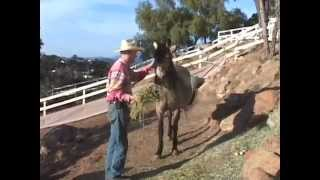 Noelle's Progress - Day 70 - Molting Not Foaling