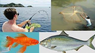 Fish catching in SLOW MOTION |.  मछली पकड़ना गांव का